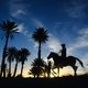 / Фотограф: Gallops of Morocco